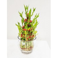 Bamboo Tower In Glass Vase