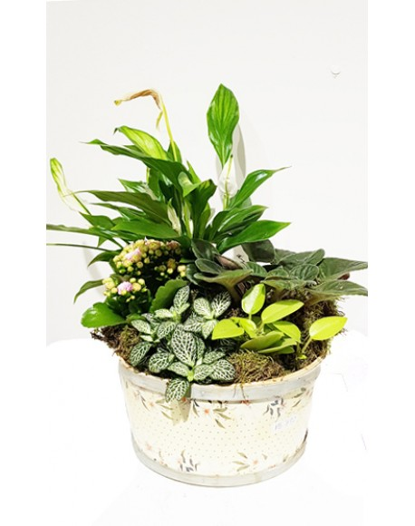 Mix Plants In Round Basket